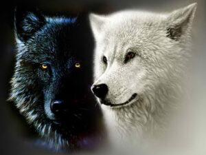 """""""Los dos lobos """""""
