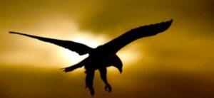 Vuela con águilas